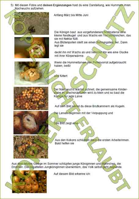 projekte flyer ausstellungen arbeitsbl tter f r sch ler zu unserer ausstellung wildbienen. Black Bedroom Furniture Sets. Home Design Ideas