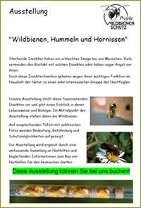 projekte flyer ausstellungen ber wildbienen hummeln. Black Bedroom Furniture Sets. Home Design Ideas